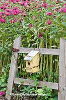 63821-20712 Birdhouse on rustic fence  in garden with Raspberry Wine Bee Balm (Monarda didyma 'Raspberry Wine')  Marion Co. IL