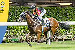Jockey #9 Matthew Poon Ming-fai riding Le Pegase during Hong Kong Racing at Happy Valley Racecourse on on September 05, 2018 in Hong Kong, Hong Kong. Photo by Yu Chun Christopher Wong / Power Sport Images