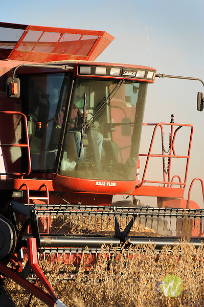 Case 2388 Combine harvesting soybeans. Pennsdale, PA.