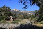 Santa Barbara's Botanic Gardens & City Parks
