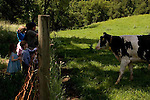Bucher Farms, near Bishop's Ranch in Healdsburg, California, is a producer for Clover Stornetta Farms. Clover was the first dairy west of the Mississippi to offer rBST free milk.