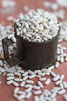 France, Aude (11),  Villeneuve-la-Comptal, les haricots de Castelnaudary de Jean-François Monod producteur de haricots (lingots) //France, Aude, Villeneuve  la Comptal, the Castelnaudary beans, Jean-Francois Monod producer of beans