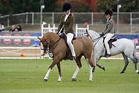 Hunter Pony over 11 NE 11.2hh