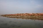 Venezia - Laguna Nord: barene