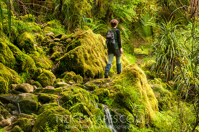 Young woman hiking in native forest near Punakaiki Cave, Paparoa National Park, Buller Region, West Coast, New Zealand, NZ