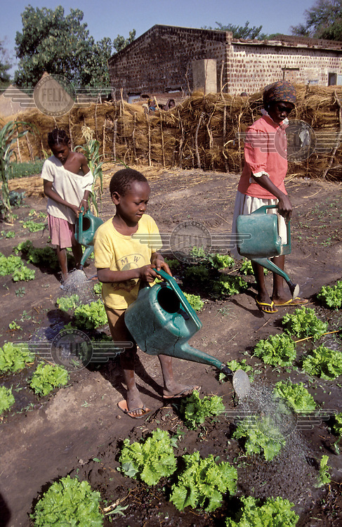 © Giacomo Pirozzi / Panos Pictures..CHAD..Family watering their lettuce patch.