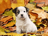 Xavier, ANIMALS, REALISTISCHE TIERE, ANIMALES REALISTICOS, dogs, photos+++++,SPCHDOGS975,#A#
