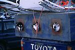 Husky truck kennel
