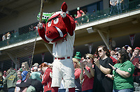 NWA Democrat-Gazette/CHARLIE KAIJO Arkansas Razorbacks fans cheer during a baseball game, Sunday, March 17, 2019 at Baum-Walker Stadium in Fayetteville.