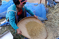 LAOS Vientiane NAFRI Forschungsinstitut fuer Land- u. Forstwirtschaft, Anbau von verschiedenen Reissorten und Kreuzung von neuen Sorten mit hoeheren Ertraegen, Reis Genbank / LAOS rice research institut NAFRI , rice seed bank, different rice varieties for crossing of new hybrids