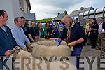 The  Judge Pa Fitzgerald of Clonmel County Tipperary making his decision on the Best Ram category in Annascaul on Sunday.