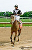 Joint Return winning The Our Mims Stakes at Delaware Park racetrack on 6/4/14