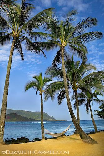 Kauai Palms