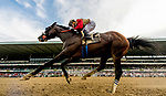 July 6, 2019 : Preservationist #2, ridden by Junior Alvarado, wins the Suburban Stakes during the Stars and Stripes Racing Festival at Belmont Park in Elmont, New York. Scott Serio/Eclipse Sportswire/CSM