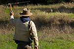 Coyote (Canis latrans) biologist, Jonathan Young, using telemetry to track juvenile male, Presidio Golf Course, Presidio, San Francisco, Bay Area, California