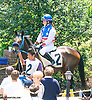 Castle Road with Anna Carrow aboard in the paddock before the Longines International Ladies Fegentri Amateur race at Delaware Park on 6/8/15