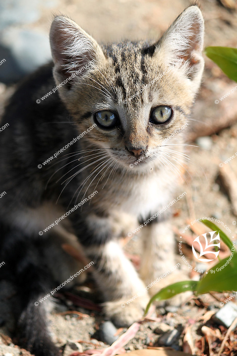 Stock image of cute little kitten looking above.