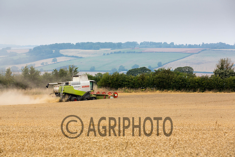 Harvesting Wheat in Northamptonshire<br /> Picture Tim Scrivener 07850 303986