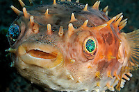 Marine Fish