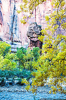 Autumn, Pillar, golden cottonwood, red cliffs, Virgin River, Zion National Park