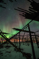 Northern Lights shine in sky above silhouette of cod drying racks, Flakstadøy, Lofoten Islands, Norway