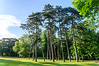 France, Indre-et-Loire (37), Montlouis-sur-Loire, jardins du château de la Bourdaisière, vers le portail d'entrée, groupe de pin laricio (Pinus nigra var. corsicana)