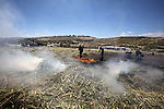 """Palestinian farmers roast harvested green wheat while producing the """"Freekeh"""" at a farm in the West Bank city of Jenin, on April 28, 2016. Freekeh a cereal food made from green wheat that goes through a roasting process in its production. It is an ancient Arabian dish popular in Palestine Jordan and Egypt.The wheat is harvested while the grains are yellow and the seeds are still soft. then piled and sun-dried. The piles are then set on fire so only the straw and chaff burn. Photo by Nedal Eshtayah"""