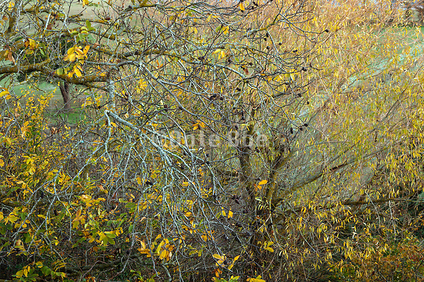 nature abstraction during late fall season