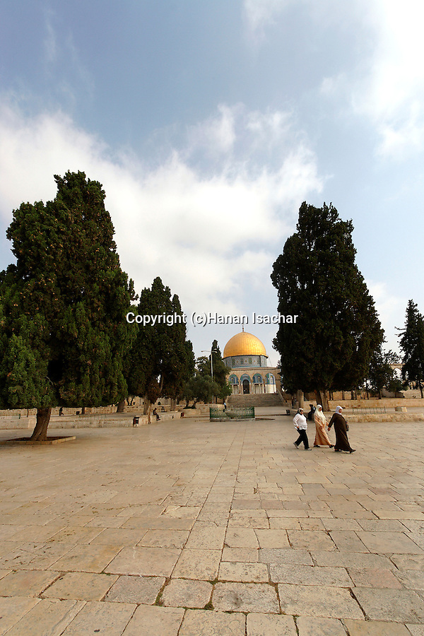 Israel, Jerusalem. Cypress trees on Temple Mount