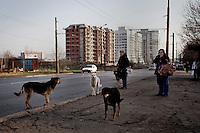 BULGARIA, Sofia, 2012/04/5..Local residents of Lyulin quarter in Sofia, Bulgaria, awaiting bus surrounded by a group of stray dogs..BULGARIE, Sofia, 2012/04/5..Des habitants du quartier de Lyulin à Sofia, Bulgarie, attendent leur bus entourés d'un groupe de chiens errants..© Pierre Marsaut