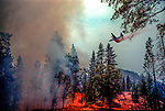 August 11, 1990 Yosemite National Park  --  A-Rock (Arch Rock) Fire  -- Air tanker drops retardant on burning tree line near Dry Gulch on the western edge of the A-Rock Fire in Yosemite National Park. The Arch Rock Fire burned over 16,000 acres of Yosemite National Park and the Stanislaus National Forest.  At the same time across the Merced River, the Steamboat Fire burned over 5,000 acres of both Yosemite National Park and the Sierra National Forest.