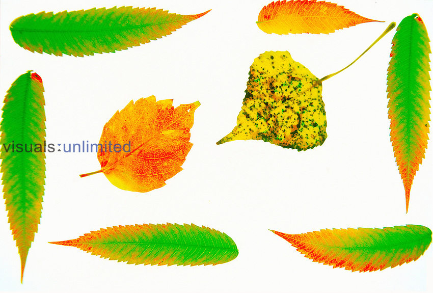 Variety of leaves in fall colors