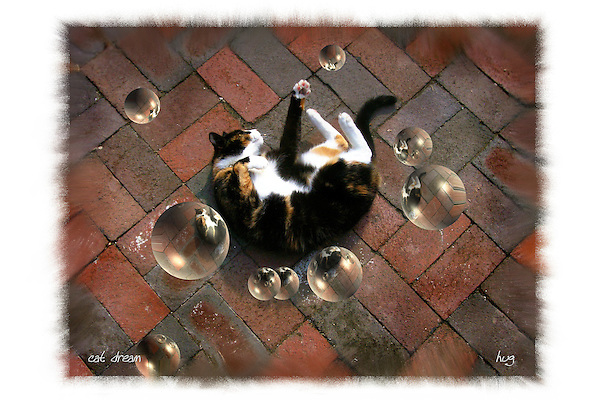 Cat playing with bubbles