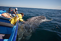 p7240-D. Gray Whale (Eschrichtius robustus), playful adult rubbing against underside of tour boat. Baja, Mexico. .Photo Copyright © Brandon Cole. All rights reserved worldwide.  www.brandoncole.com..This photo is NOT free. It is NOT in the public domain. This photo is a Copyrighted Work, registered with the US Copyright Office. .Rights to reproduction of photograph granted only upon payment in full of agreed upon licensing fee. Any use of this photo prior to such payment is an infringement of copyright and punishable by fines up to  $150,000 USD...Brandon Cole.MARINE PHOTOGRAPHY.http://www.brandoncole.com.email: brandoncole@msn.com.4917 N. Boeing Rd..Spokane Valley, WA  99206  USA.tel: 509-535-3489