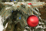 A red ornament decorating a Christmas tree during the Christmas season