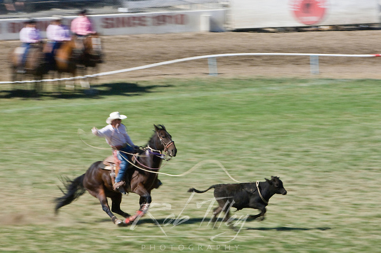 USA, OR, Pendleton, Pendleton Roundup, Calf Roping (Pan Motion Blur)