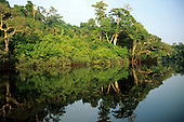 Anavilhanas archipelago, Amazon, Brazil. Rainforest river bank reflected in the water of the river.