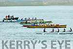 The crews take off at the Senior ladies race at the Cromane Regatta on Saturday