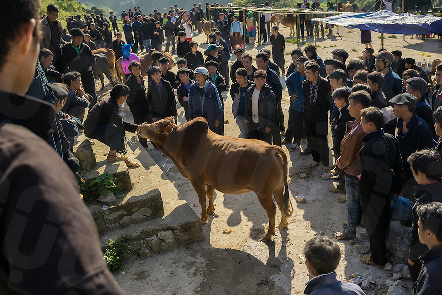 September 22, 2014 - Meo Vac (Vietnam). Locals trade live stocks at the weekly market of Lung Phin, a few kilometers from Meo Vac. © Thomas Cristofoletti / Ruom