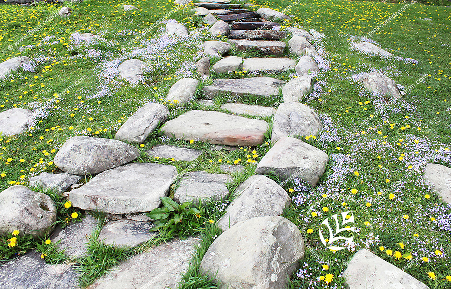 Stock image of rustic rocks staircase on a slope surrounded by wildflowers bluets and yellow hawkweed in the foothills of clingmans dome in the great smoky mountains national park, Tennessee, America.
