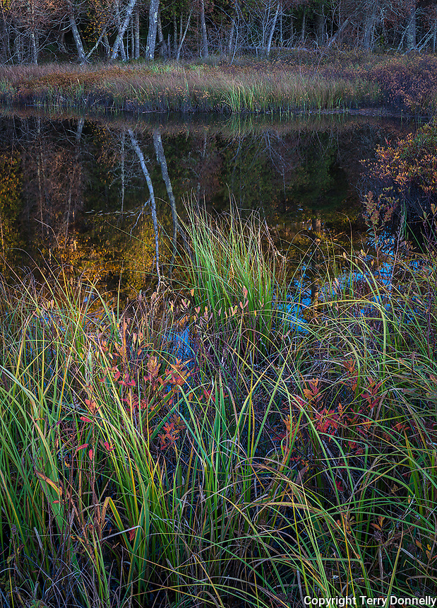 Apostle Islands National Lakeshore, WI: Forest and marsh reflections at dusk on an ephemeral pond in fall at Little Sand Bay