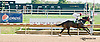 Nekomata winning at Delaware Park on 10/2/13