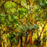 A stunning abstract view of the forest reflections on the river that looks at once like an impressionist painting. A captivating work by Queenstown based landscape photographer Jason Law.