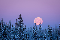 The full moon sets over Fairbanks, Alaska in mid-December's subzero temperatures.