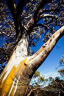 Image Ref: T061<br /> Location: Back Country, Mt Buller<br /> Date: 22 March, 2015