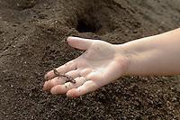 Le compost fini contient encore des lombrics