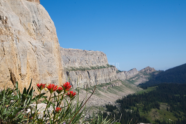 Indian Paintbrush wildflowers and the Chinese Wall in the Bob Marshall Wilderness in Montana