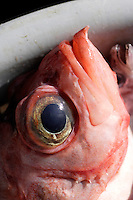 Close up of Deepwater redfish Sebastes mentella in basket Barents sea North Atlantic.