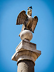 Crowned eagle, Ravenna, Italy