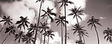 USA, Hawaii, Oahu, East Shore, scenic view of palm trees against cloudy sky (B&W)